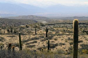 Arizona City Title Loans can get you more green than the desert landscape!